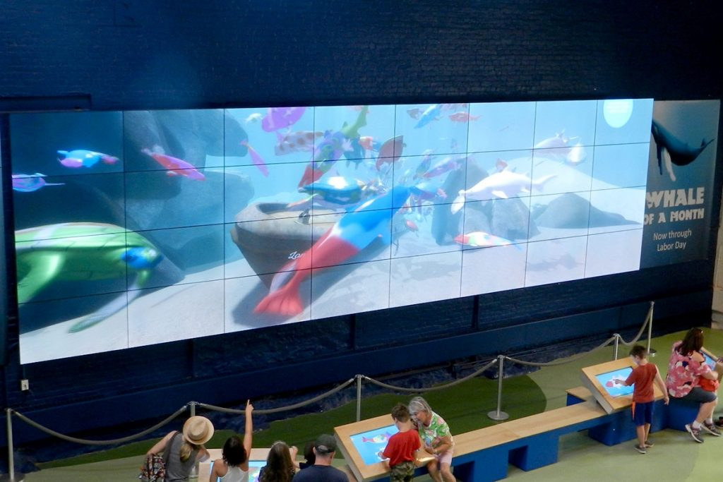 4K Video Wall RGB Spectrum en el Maritime Aquarium